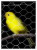 Pássaro.. (Jessica Aquino) Tags: birdwatcher
