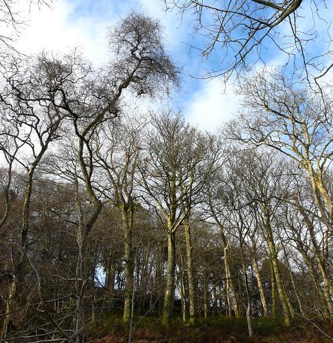 Goldenberry woodland 27Nov08