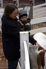 Ansel not petting the Goats (Kacey3) Tags: memphiszoo ansel