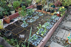 Vegetable Bed 1 Planted (joeysplanting) Tags: broccoli garlic mustard kale brusselssprouts collard squarefootgarden sfg vegetablebed1