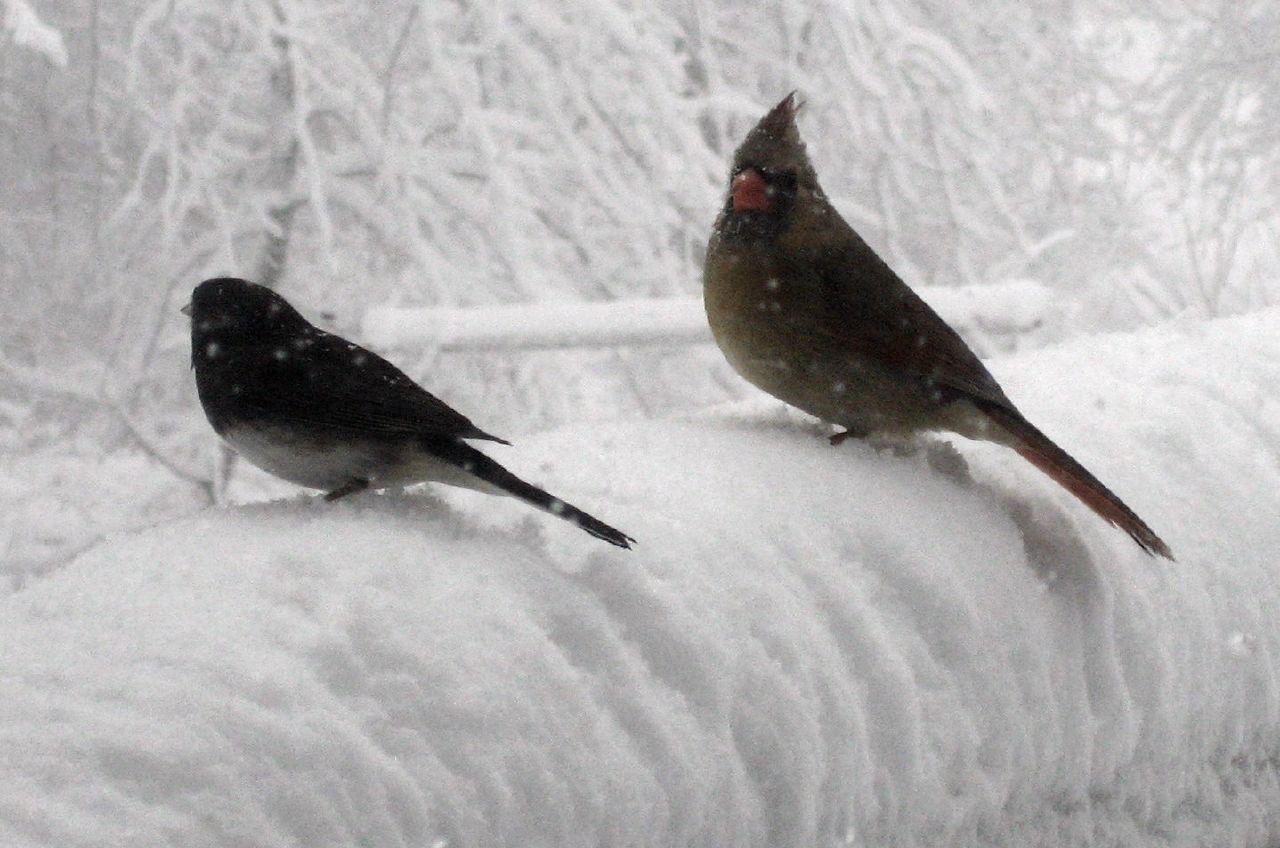 January 2008 snow storm