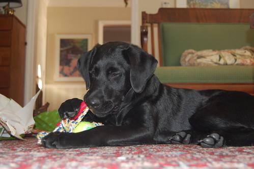 jackson - christmas 2008