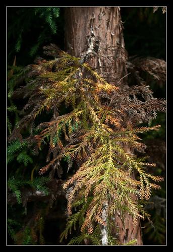 Rameau coloré de la forêt de Bélouve