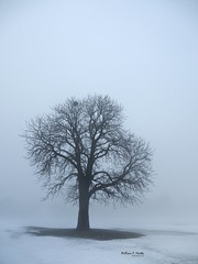December Fog (Bill Hertha) Tags: park snow ontario canada tree fog landscape day suburban thornhill thesecretlifeoftrees panasoniclumixg1 lumixgvariof35561445