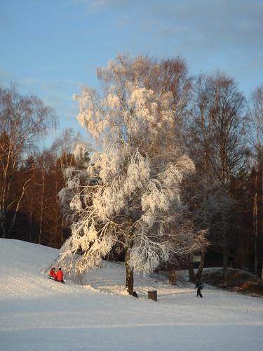 En vinterdag på Lida friluftsgård, december 2008