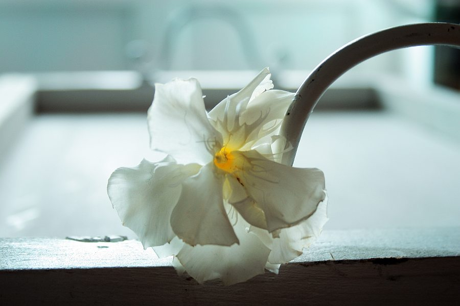 whiteorchid 039