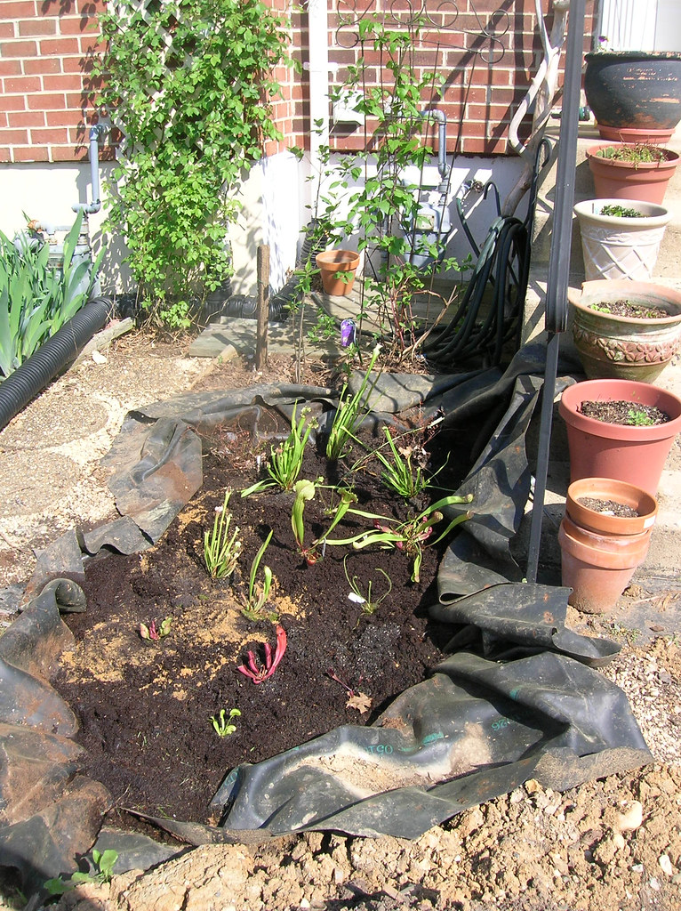 Planted bog