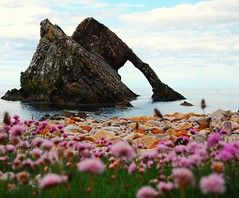 bow fiddle rock moray coast scotland (plot19) Tags: uk pink flowers blue sea scotland nikon rocks britain pebbles coastline seastacks moraycoast mywinners colorphotoaward bowfiddlerock vosplusbellesphotos saariysqualitypictures updatecollection plot19