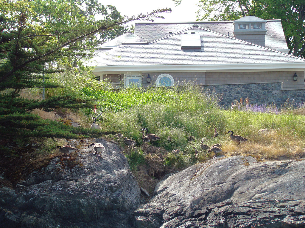 2009-05-31 Chatham 225