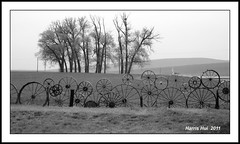 Wheels Fence in B&W - Uniontown S0960e (Harris Hui (in search of light)) Tags: trees bw canada monochrome vancouver fence mono us blackwhite washington bc framed circles wideshot wheels creative panoramic richmond rainy fujifilm grayscale digitalbw hazy raining 169 pointshoot wallawalla uniontown wideview digitalcompact s1600 fujis1600 169format noballoons crosstheborder wallawallahotairballoonstampede harrishui vancouverdslrshooter happyfencefriday wheelsfence shottakenfromcarwindow recycledwheels shottakenintherain roundandroundinshapes