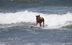 DogSurf_Loews2011_102