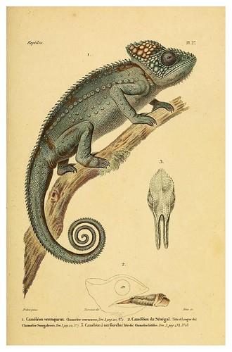 001-Erpétologie générale ou Histoire naturelle complète des reptiles 1834