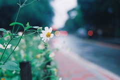 (brandonhuang) Tags: street flowers light flower film leaves analog lights leaf nikon kodak bokeh f801 n8008 brandonhuang