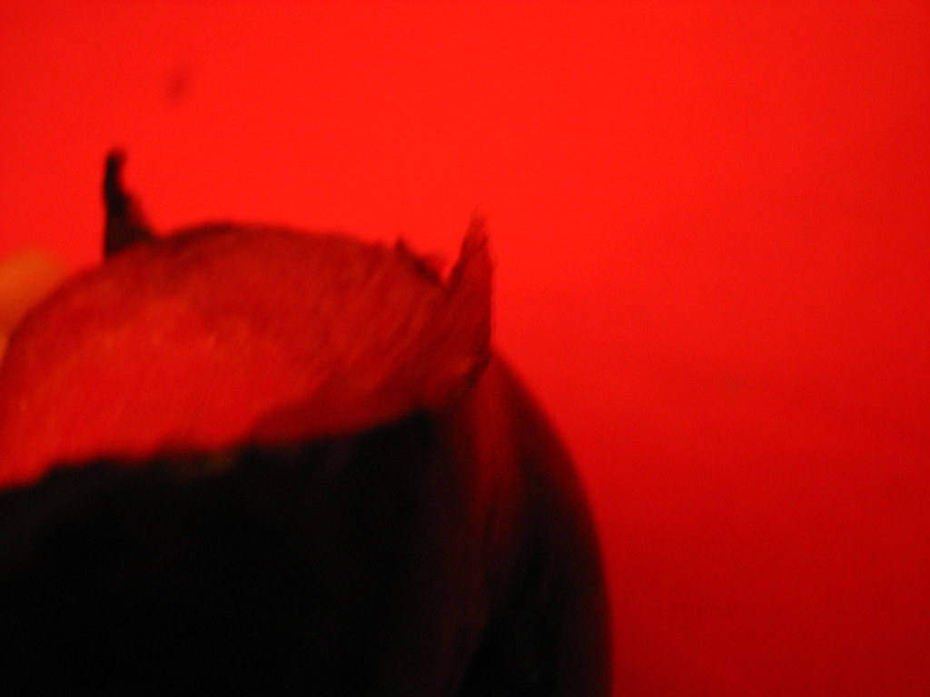 Y no nos dejes caer en la tentación amén. (dueloaletrado) Tags & The Worldu0027s Best Photos of rojo and tentación - Flickr Hive Mind