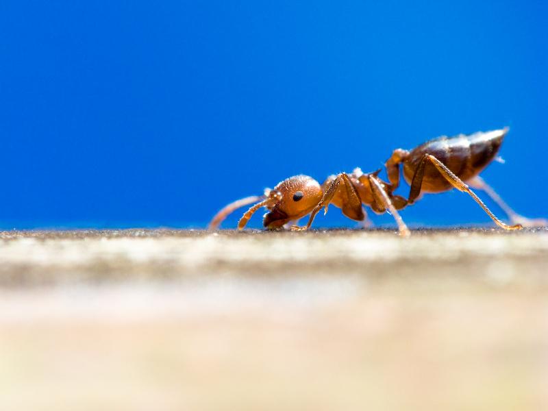 老伯伯-螞蟻(生態保育的重新認識)