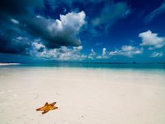 Playa paradiso with starfish (Topyti) Tags: sea beach mare starfish cuba playa natura beaches caribbean spiaggia spiagge caraibi 714mm cayolargodelsur playaparadiso playasparadisiacas paradisebeaches