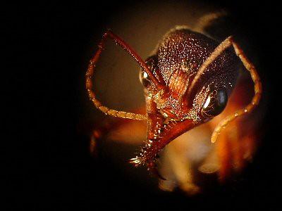 Hormigas en sueños