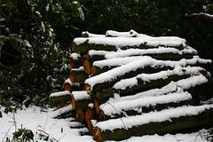 Snowy logs (Chris Toyne) Tags: park uk trees winter england lake snow nature canon bigma logs sigma apo lincolnshire lincoln 2008 hartsholme 400d 50mm500mm