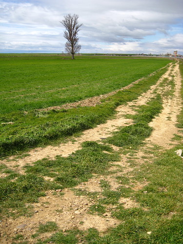 El camino que lleva al chopo
