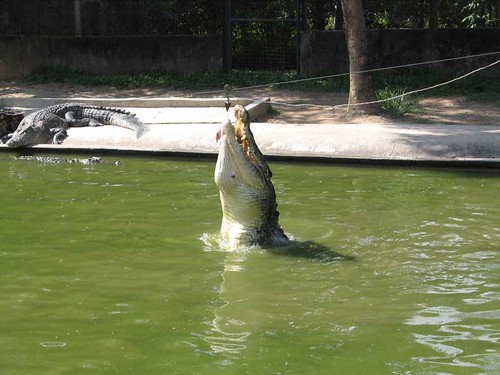 Langkawi Crocodile Farm Tourism