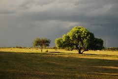 se aproxima... (Zona_cielo) Tags: sol rio arbol uruguay lluvia negro