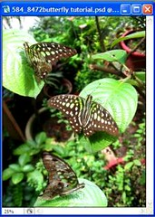 Butterfly collage tutorial - fourth photo (step 7), a collage with 3 pictures merged