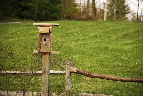 The Ugliest Birdhouse in the World