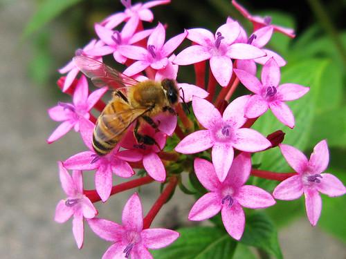 大安區公所辦自然人憑證 花 蜜蜂 天空