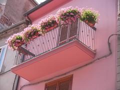 Sany0029 (alfiererosso) Tags: pink rosa blumen balcon balcone florido gerani rosafarben balconefiorito balconwithflowers