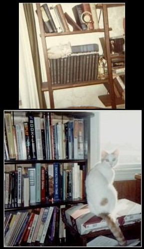 The Intersection of Cats and Books