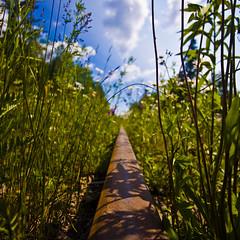 Pearl Rail (Tony Webster) Tags: railroad flowers sky sun ontario canada clouds vanishingpoint bokeh rail wideangle growth pearl sleepinggiant 10mm canonefs1022mmf3545usm ccbync20150103 cgg1508 crv1523