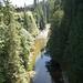 Capilano Suspension Bridge_6
