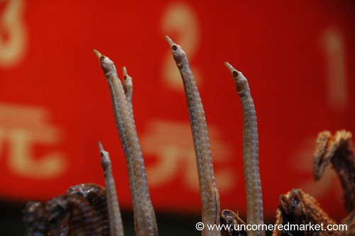 Gross Food - Sea Horse in Beijing