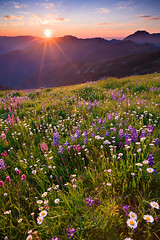 Olympic Wildflower Sunset (KPieper) Tags: sunset mountains landscape washington searchthebest wildflowers olympics olympicnationalpark paintbrush hurricaneridge lupine sunstar visiongroup kevinpieper kpieper pieperphotographynet