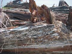 IMGP0138 (paulsyak) Tags: kayak lewes delawarebay beachplumislandshipwreck