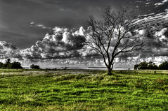 The tip of the state (MDSimages.com) Tags: world travel wild sky usa color tree green water field grass clouds digital america photography blackwhite blog nationalpark nikon media unitedstates natural image florida south basin east swamp watershed processing wetlands everglades tropical vista lone northamerica southeast solitary comparison emerald hdr d3 tonemapped michaelsteighner mdsimages hyliteproductions photomike07 subtopical mdsimagescom hylitecom