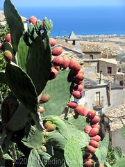 Ripe prickly pears, Badolato, and the Ionian Sea (Michelle Fabio) Tags: italy fruit italia frutta calabria fichidindia southernitaly pricklypears badolato
