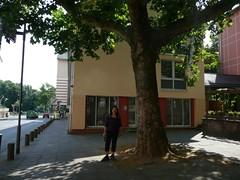 P1030243 (Michael Afar) Tags: trees germany frankfurtmain
