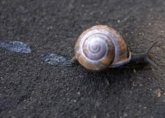 Breakneck Speed! (Manav Gupta) Tags: road fab london speed daylight cross pavement snail trail determined 2008 soe manav goldstaraward manavgupta mgupta gmanav