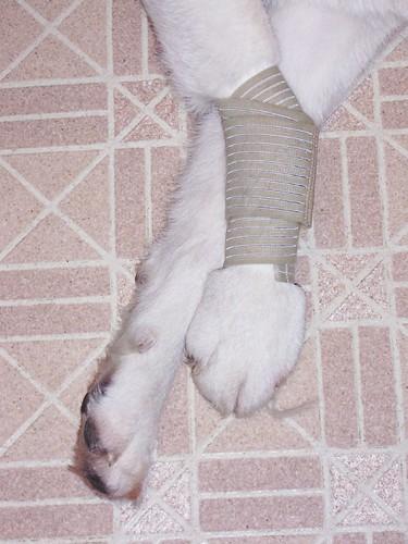naicha's legs