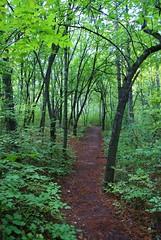 Gazi Baba Park path (kosova cajun) Tags: park forest landscape woods path macedonia skopje makedonija peisazh shkupi maqedoni pyll gazibaba