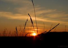 Sunset field (ImAfUzzyOne - Life keeps me away :o() Tags: light sunset sky sun nature field grass skyline night clouds evening ray rays