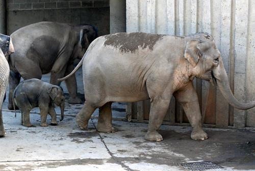 elephantfamily2.jpg