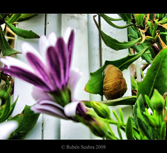 HDR - Snail and Flower (*atrium09) Tags: españa flower spain olympus hdr smail atrium09 platinumphoto theunforgettablepictures rubenseabra