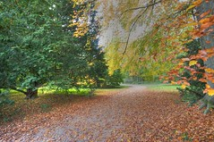 Walk This Way... (Nala Rewop) Tags: autumn trees fall leaves colours westonbirt