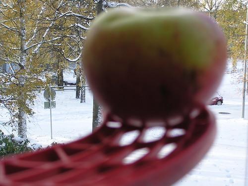 Maila, omena ja talvi