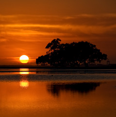 Rise (Matthew Stewart | Photographer) Tags: orange sun reflection tree beach water sunrise matthew brisbane stewart qld queensland nudgee