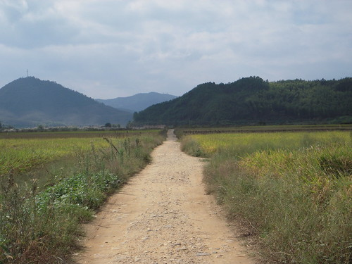 The paddy land view - 08