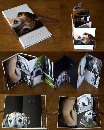 dog photos - accordion book