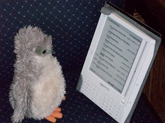 Pengu reads the kindle